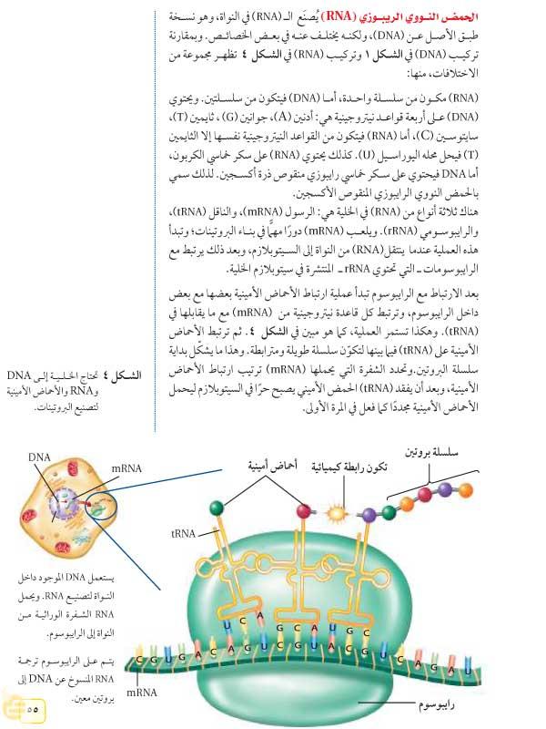 الحمض النووري الريبوزي
