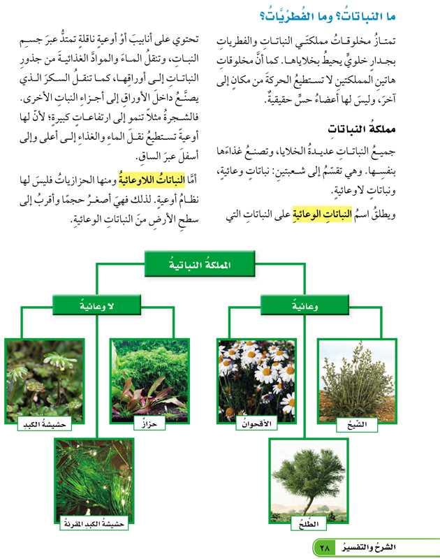 ما النباتات وما الفطريات؟