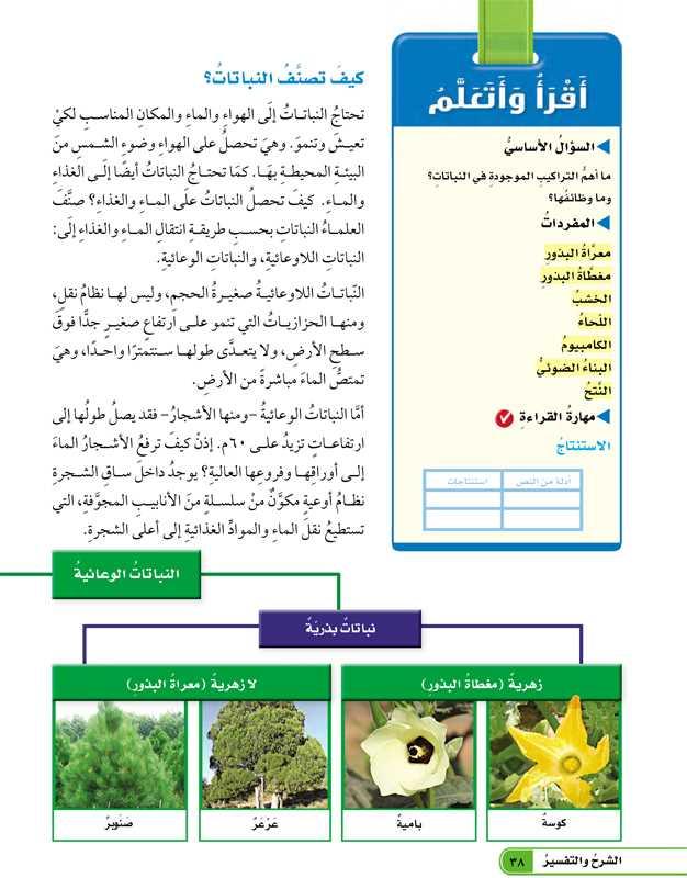 كيف تصنف النباتات؟