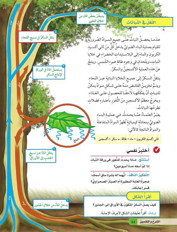 النقل في النباتات