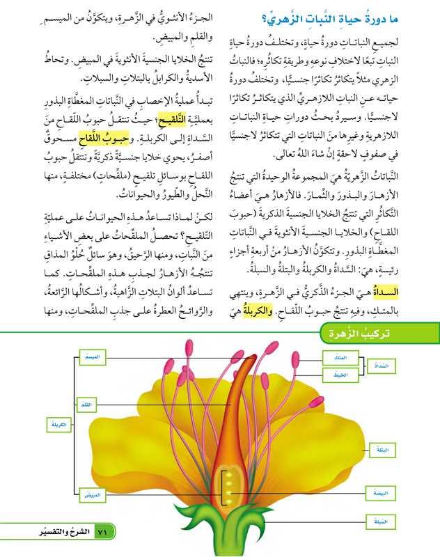 ما دورة حياة النبات الزهري؟