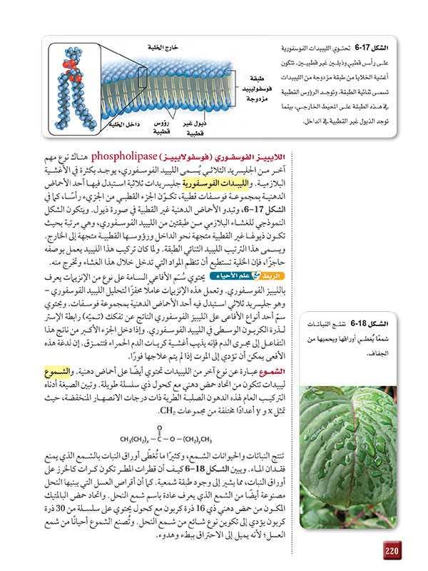 اللايبيز الفوسفوري