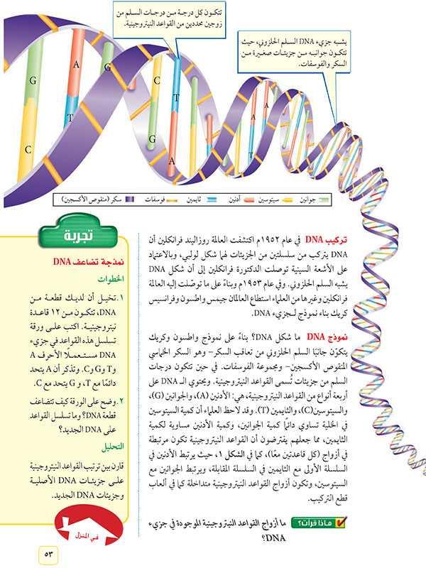تركيب DNA  وونموذج
